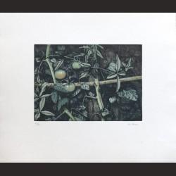 Iris Lázaro-Sin título 07
