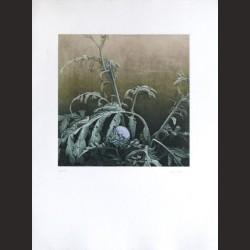 Iris Lázaro-Sin título 09