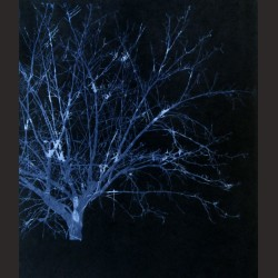 Antonio García Palomo-Winter tree azul